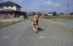 散歩20130426-3
