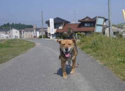 散歩20130427-3