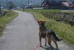 散歩20130427-4