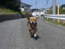 散歩20130428-1