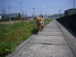 散歩20130428-5
