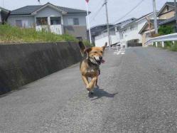 散歩20130429-1