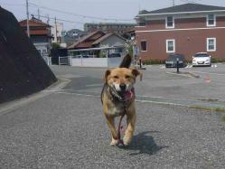 散歩20130429-2