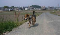 散歩20130429-4