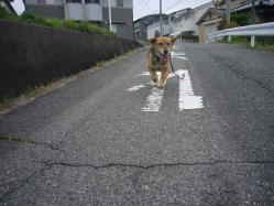散歩20130430-1