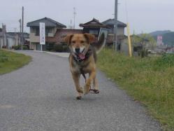 散歩20130430-3