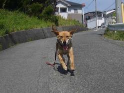 散歩20130525-1