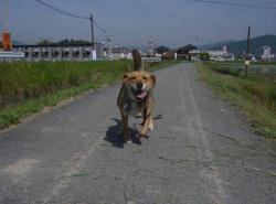 散歩20130525-3