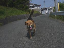 散歩20130526-1