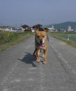 散歩20130526-4