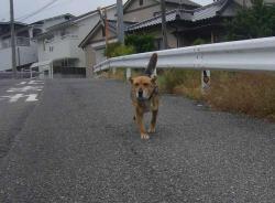 散歩20130527-1