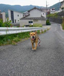 散歩20130527-2