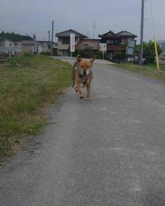 散歩20130527-4