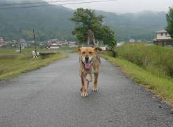散歩20130529-4