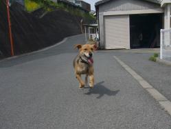 散歩20130531-3