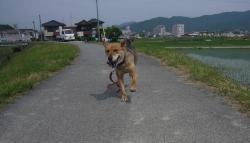 散歩20130531-4