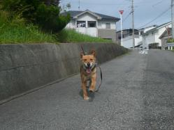 散歩20130624-2