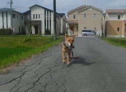 散歩20130624-3