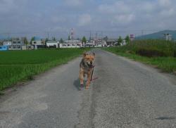 散歩20130624-4