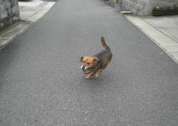 散歩20130625-1
