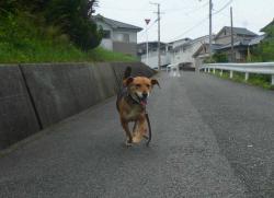散歩20130625-2