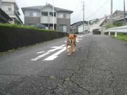 散歩20130626-3