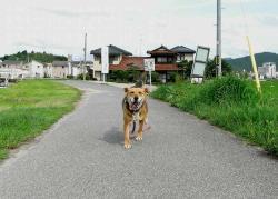 散歩20130627ー4