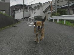 散歩20130628-3