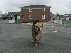 散歩20130628-4