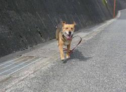 散歩20130630-2