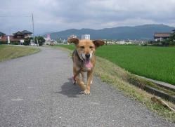散歩20130630-3