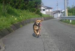散歩20130721-1