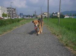 散歩20130722-1