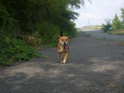 散歩20130722-4