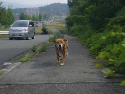 散歩20130722-5