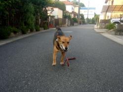 散歩20130723-1