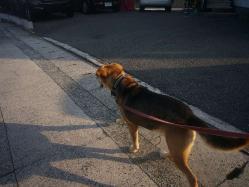散歩20130723-2