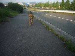 散歩20130723-3