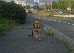散歩20130723-4