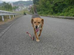 散歩20130725-5