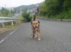 散歩20130725-4