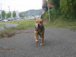 散歩20130725-3