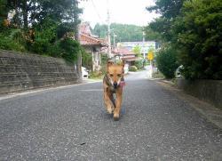 散歩20130725-1