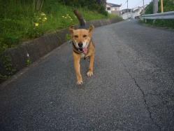 散歩20130726-2