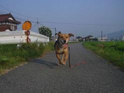 散歩20130726-3