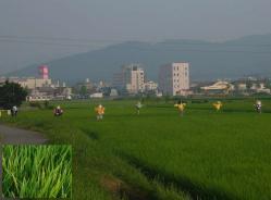 散歩20130726-4