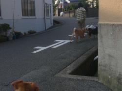 散歩20130726-5