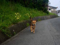 散歩20130727-2