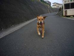 散歩20130727-3