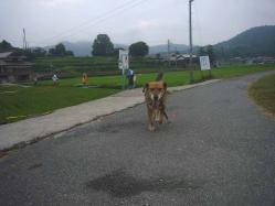散歩20130729-2